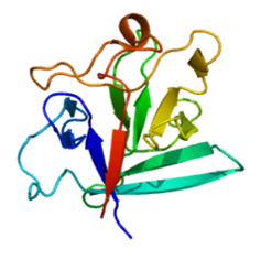 3D structure of FGF1