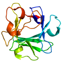 3D structure of FGF2